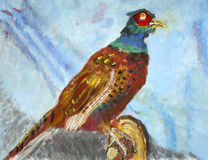 Painting of pheasant Royalty Free Stock Image