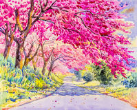 Painting pink color of wild himalayan cherry flower and emotion Stock Photography