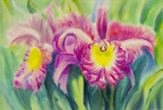 Painting purple,pink color of orchid flower and green leaves Royalty Free Stock Photo