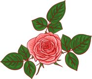 Painting rose with leaves. Hand drawn vector illustration Vector Illustration