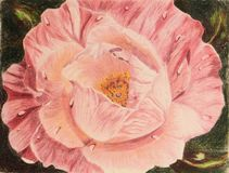 Painting of rose with water drops Stock Image