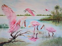 Painting of roseate spoonbill (Platalea ajaja) birds Stock Photography