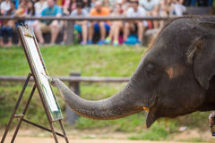 Painting show by elephant Royalty Free Stock Photography