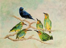 Painting of six honeycreeper birds on tree branches. Very detailed artwork of one male and five females honeycreeper birds perched on tree branches painted with Vector Illustration