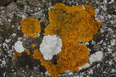 Painting on the stones. Painting with moss on the stones. Ochre and shades of grey. Moss and lichen Royalty Free Stock Images