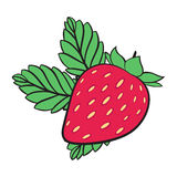 Painting Strawberry, vector Stock Photos