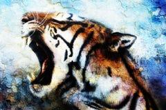 Painting Sumatran Tiger Roaring, crackle structure. royalty free illustration