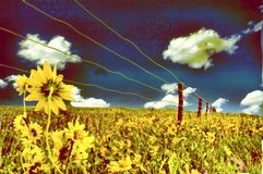 Sunflowers. Painting. Sunflowers field. Wired fence Royalty Free Stock Photo