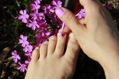 Painting toes with pink nail-polish Royalty Free Stock Image