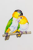 Painting of two Caique parrots Stock Photos