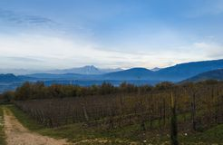 Painting the Valpolicella. A View of Valpollicella i Italy during a winter day royalty free stock photo