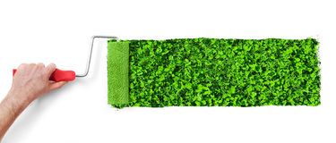 Painting the wall with grass Stock Photos