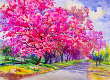 Painting watercolor landscape original pink red color of Wild himalayan cherry. Stock Photos