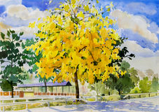 Painting watercolor landscape yellow color of golden tree flower. Painting watercolor landscape original yellow, orange color of golden tree flowers,and morning vector illustration