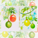 Painting watercolor,red, yellow,green color of passion fruit. Painting watercolor original realistic on paper,red, yellow,green color of passion fruit and royalty free illustration