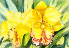 Painting yellow,orange color of orchid flower and green leaves Stock Images
