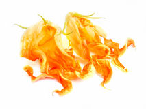 Painting of  zucchini flowers photo manipulating concept Stock Images