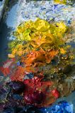 Paints. Paint pallete stock images