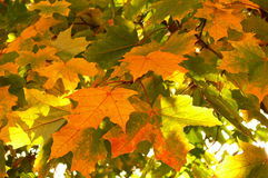 Paints of autumn Royalty Free Stock Images