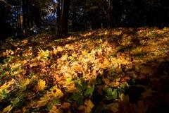 Paints of autumn Stock Photo