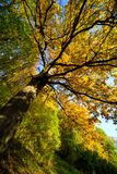 Paints of autumn Royalty Free Stock Photography