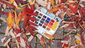 Paints are lying on the ground in colorful leaves stock photography