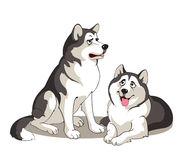 Pair of Alaskan Malamutes Stock Images
