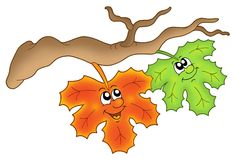Pair of autumn leaves on branch Royalty Free Stock Photography