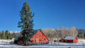 Pair of barns on a farmers ranch in Idaho Royalty Free Stock Images