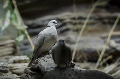 A pair of beautiful white birds sit on stone stock photography