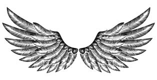 Pair of Bird Wings Royalty Free Stock Images