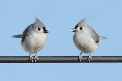 Pair of Birds Stock Image