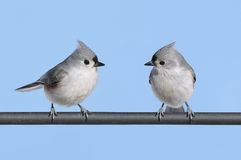 Pair of Birds Stock Photo