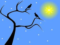 A pair of birds on a bare winter tree Royalty Free Stock Images
