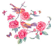Pair of birds on a blooming camellia branch. Natural floral watercolor greeting card isolated on a white background royalty free illustration