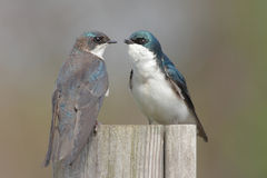 Pair of Birds on a stump Stock Images