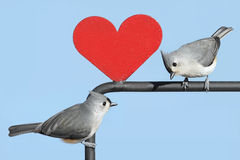 Pair of Birds With Valentine Heart Royalty Free Stock Photo