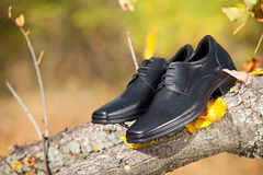 Pair of black male shoes on branch in autumn park. Pair of black male shoes in the autumn park Royalty Free Stock Images