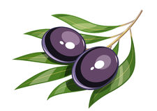 Pair of black olive vector illustration eps10 Royalty Free Stock Photo