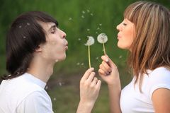 Pair blows on dandelions in hands Royalty Free Stock Photos