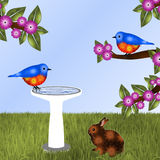 Pair of Bluebirds and Bunny Background. Pair of orange and blue birds (bluebirds)-one sitting on water-filled white birdbath, another on flowering tree limb Stock Image