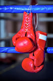 A pair boxing gloves hangs off ring Stock Images