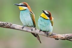 Pair of bright cute birds sitting near stock image