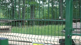 Pair of brown bear in zoo captivity cage stock video