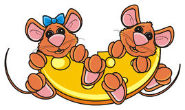 Pair of brown mice peeking out of a piece of cheese Royalty Free Stock Photography