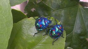 A pair of bugs Royalty Free Stock Photos