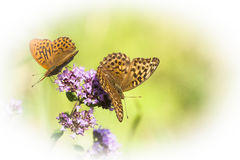Pair of butterflies Royalty Free Stock Photo