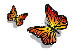 Pair of butterfly Royalty Free Stock Image