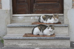 Pair of cats. On stairs royalty free stock image
