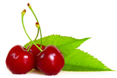 PAIR OF CHERRIES Stock Image